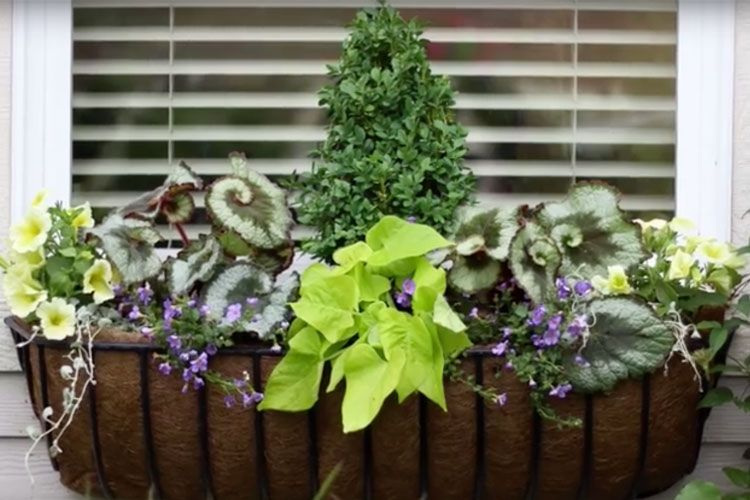 Tips On How To Arrange A Window Basket Shade Planter Video