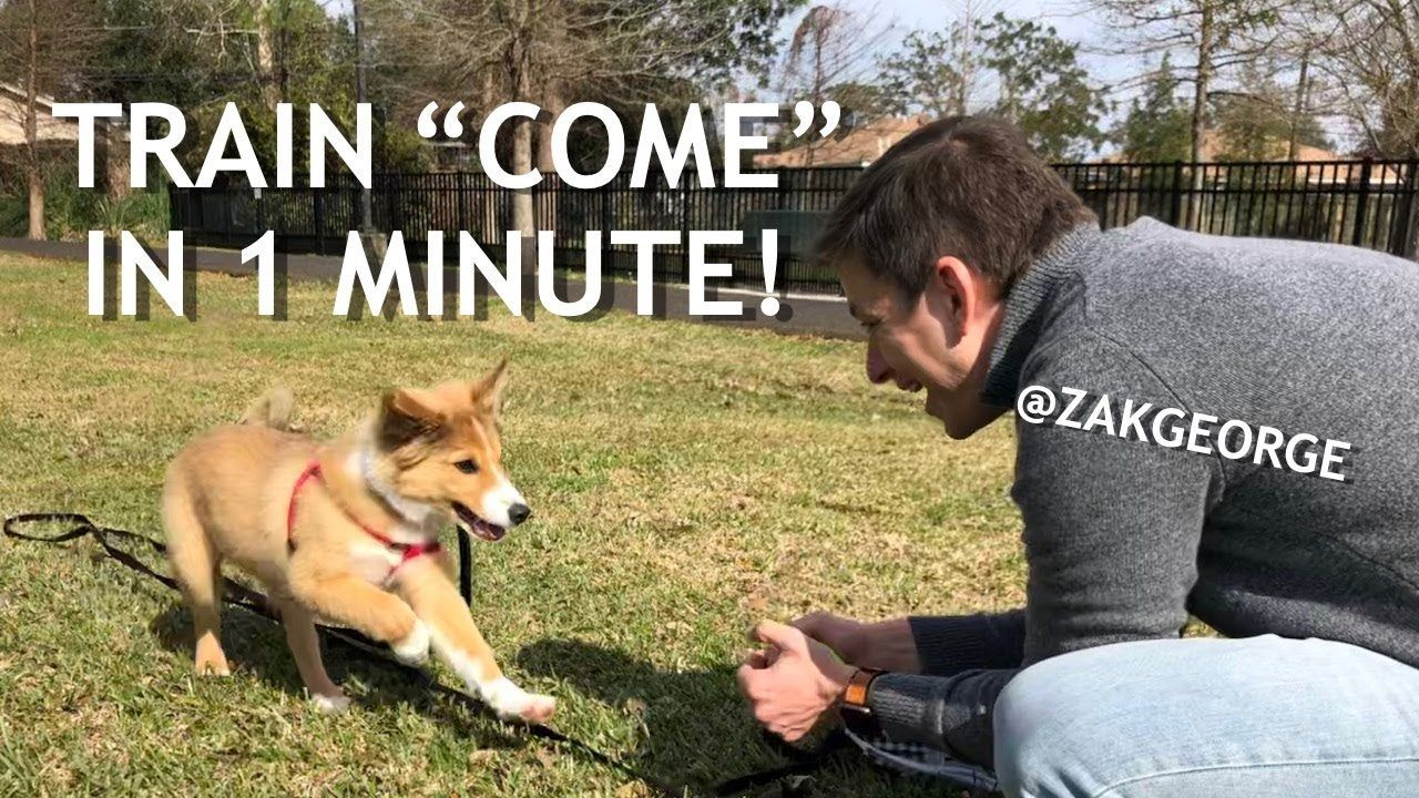 How To Train Your Dog To Come When Called In 1 Minute Youtube