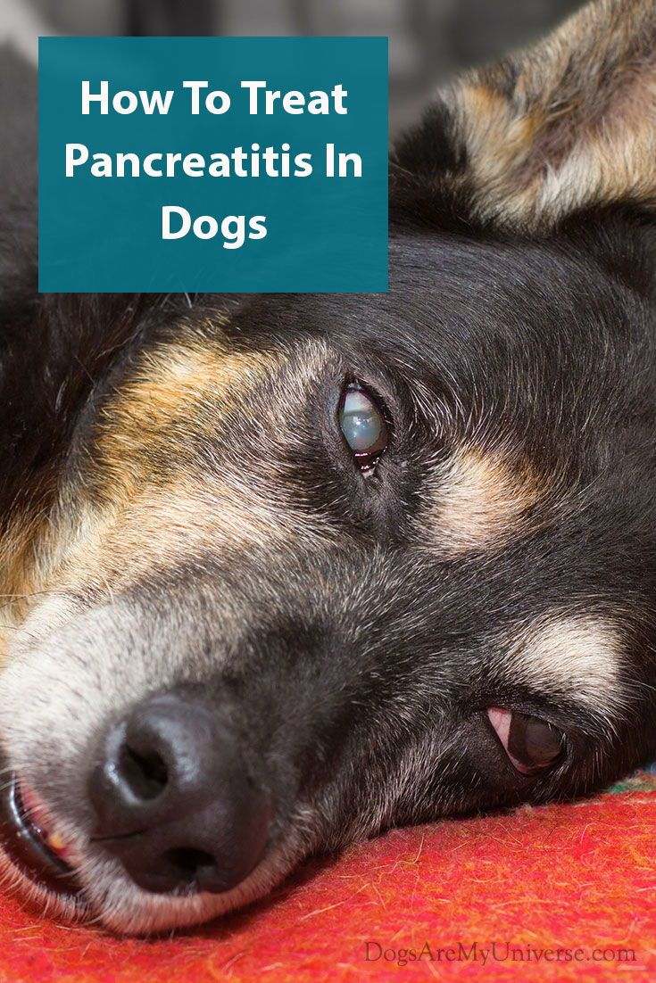 Dogs And Pancreatitis Pancreatitis in dogs, Dogs, Dog lovers