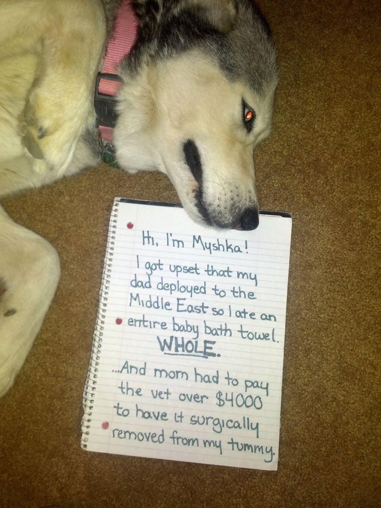 Hi, I'm Myshka! I got upset that my dad deployed to the Middle East…