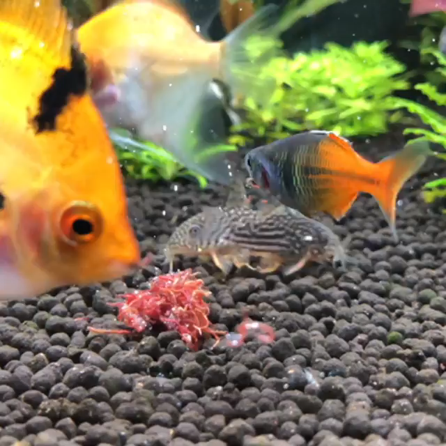 All Credit To My Aquarium Journey On Instagram As The Owner Of
