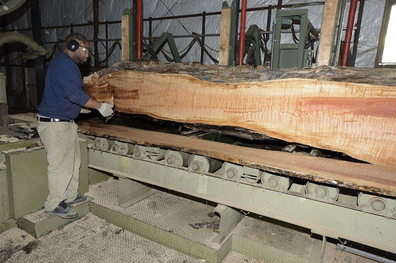 Big Leaf Maple Lumber Maple Lumber Maple Wood Wood