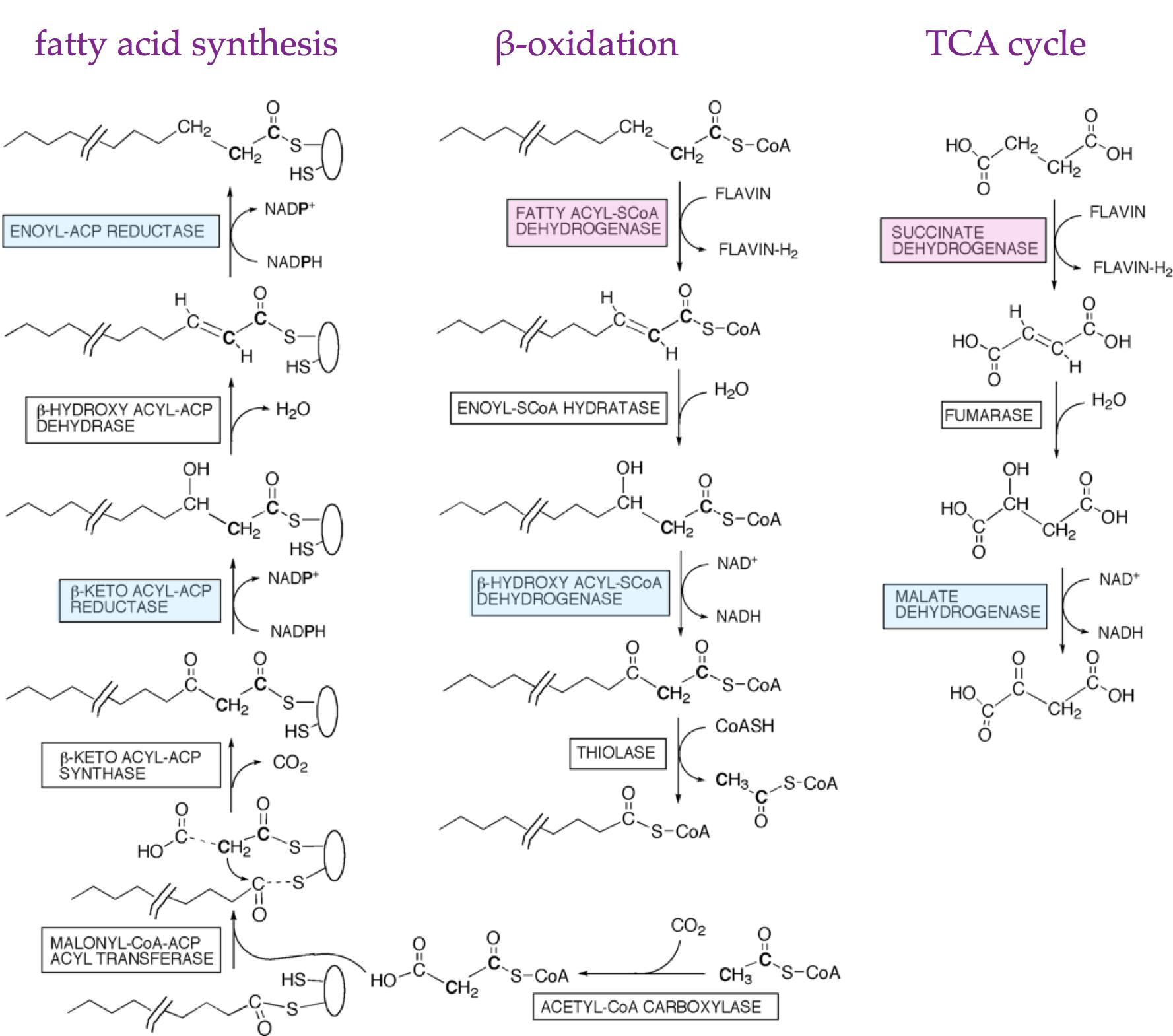 Pin On Biochemistry Slides