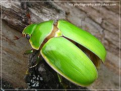 escarabajos egipcios verdes - Buscar con Google