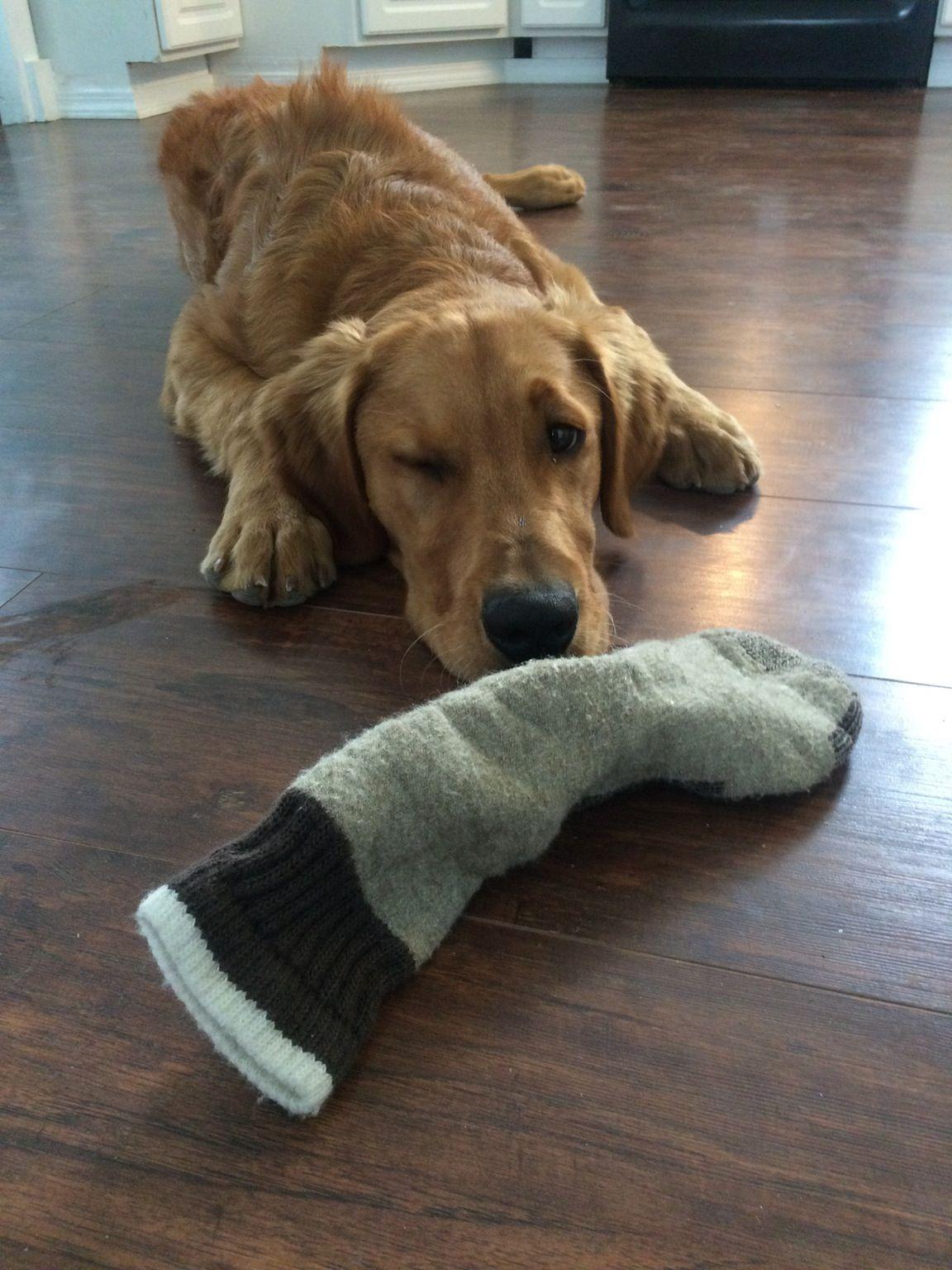 """I won't bite your hand when you reach for the sock."" winks http://ift.tt/2eimMAL"
