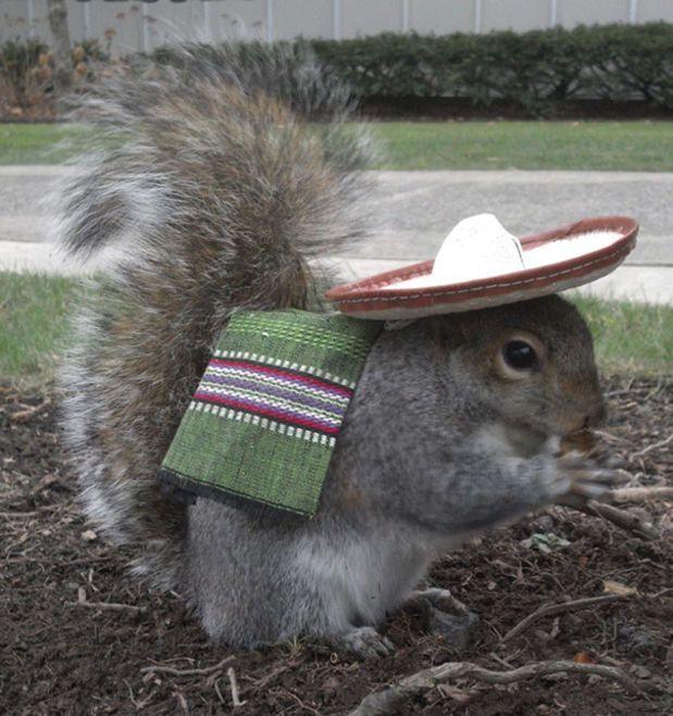 Student Befriends Campus Squirrels Then Dresses Them In The Cutest - Student befriends campus squirrels then dresses them in the cutest outfits ever