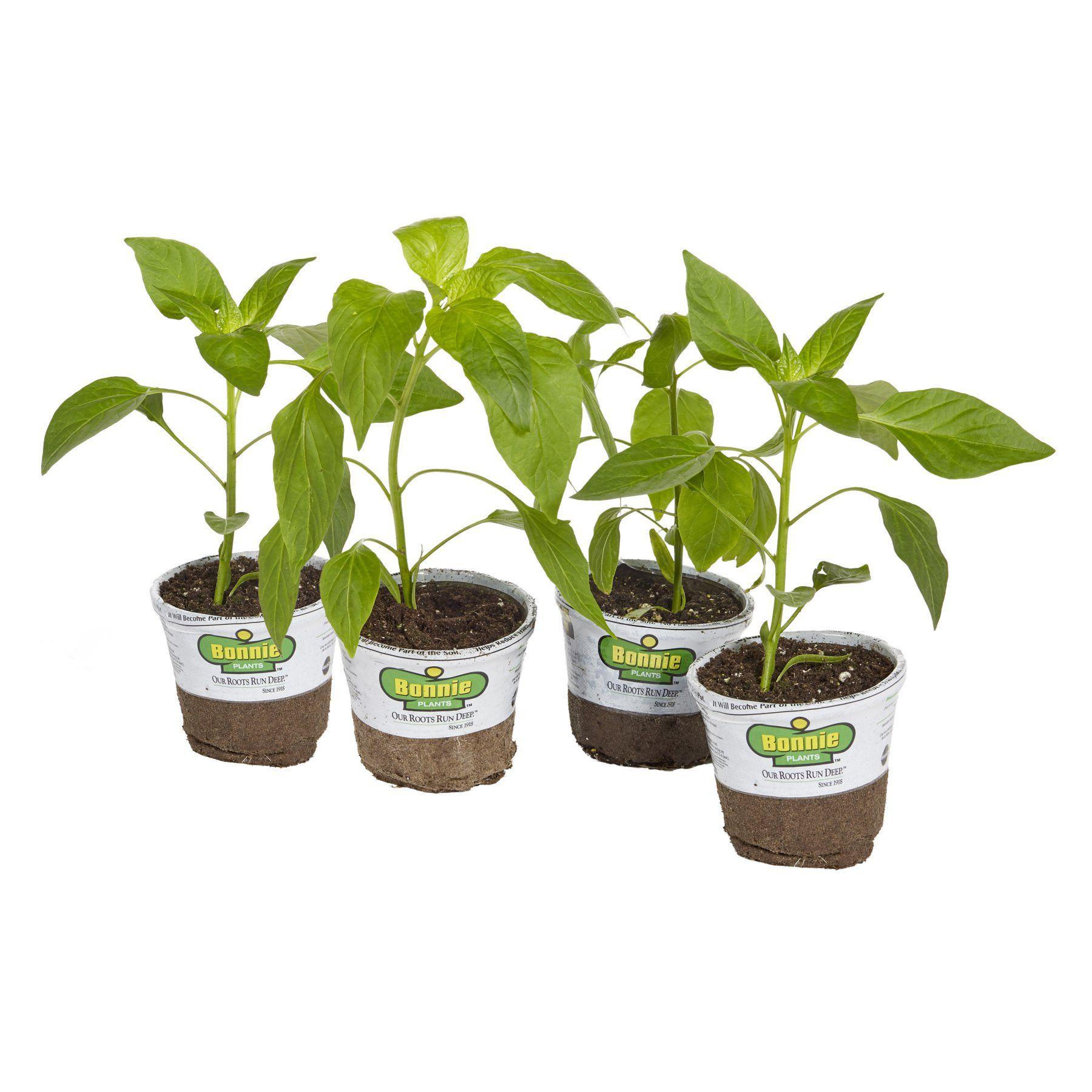 Bonnie Plants Sweet N Heat Pepper Kit Set Of 4