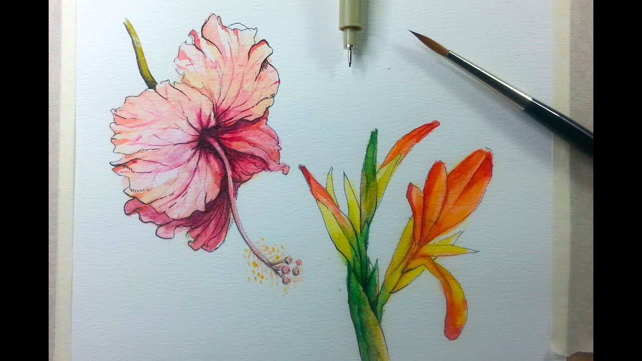 Drawing Painting Hibiscus Flower With Ink Watercolor Flower Drawing Flower Painting Watercolor