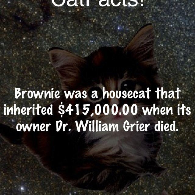 Cat fact #3