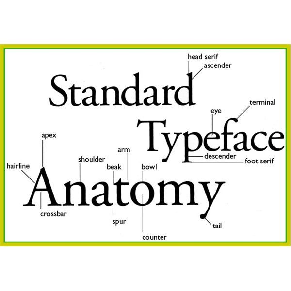 Anatomy Of Typography  Basic Elements Of Typography  On Design