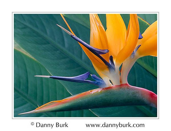 Birds Of Paradise Birds Of Paradise Flower Paradise Pictures Tropical Paradise Party