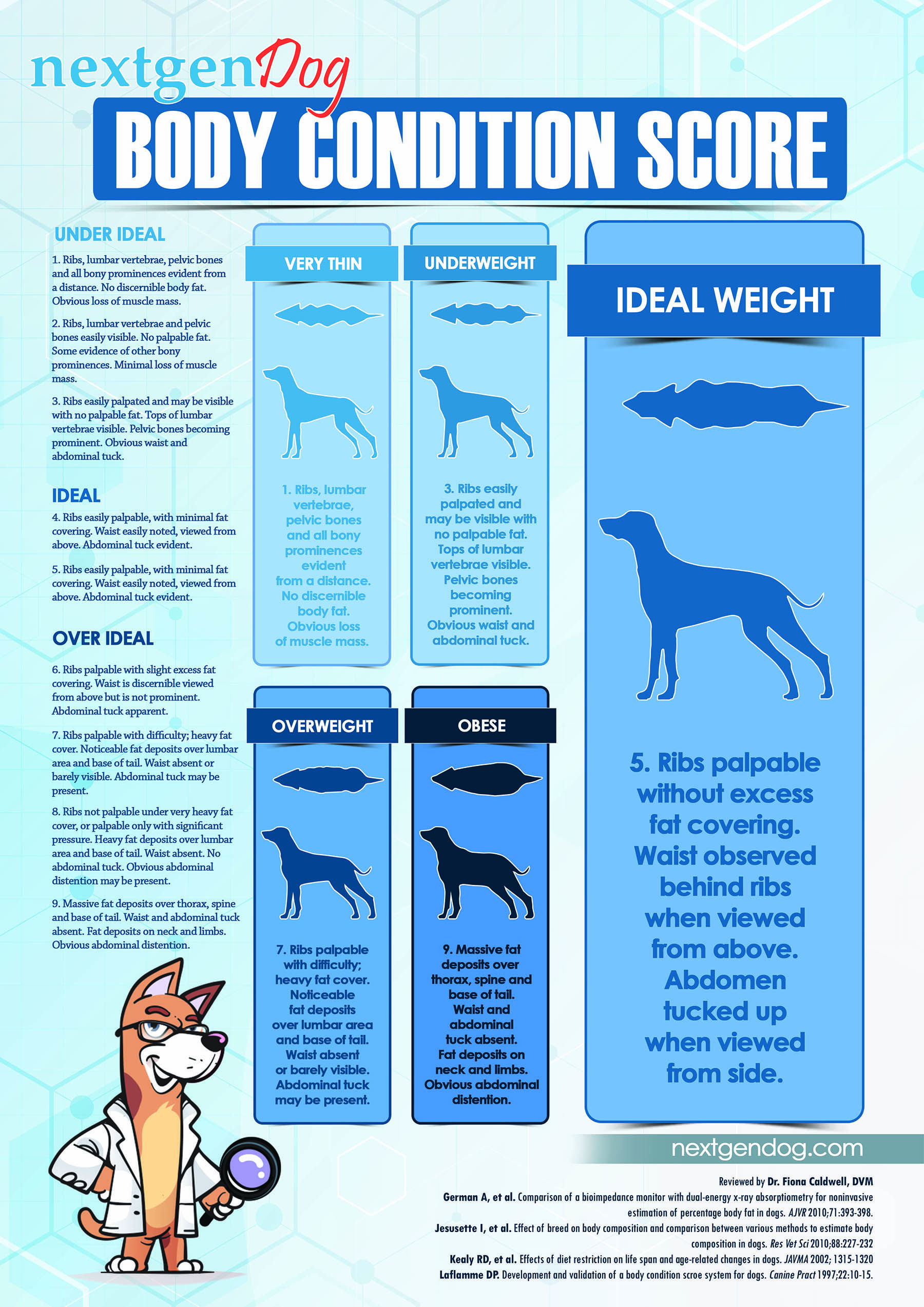 How To Feed Dogs In Different Life Stages Based On Science