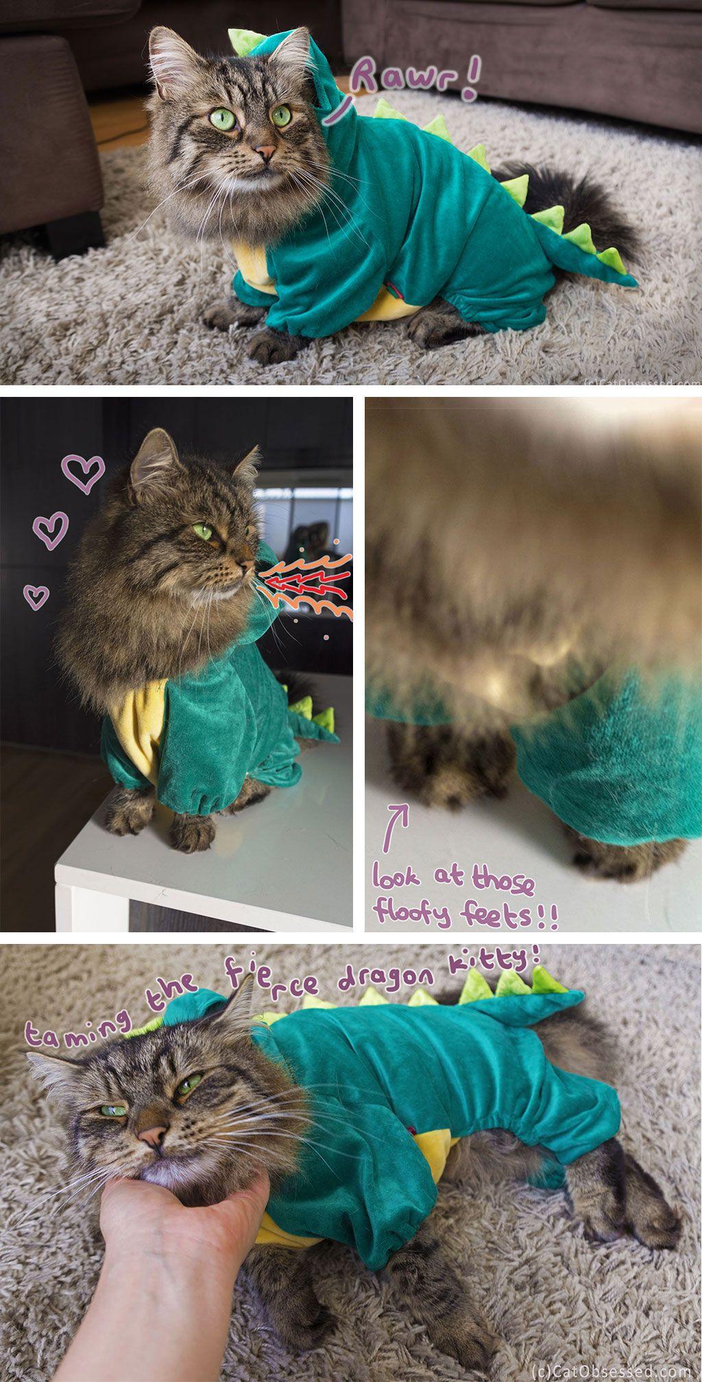 My kitty in a dragon/dinosaur costume!