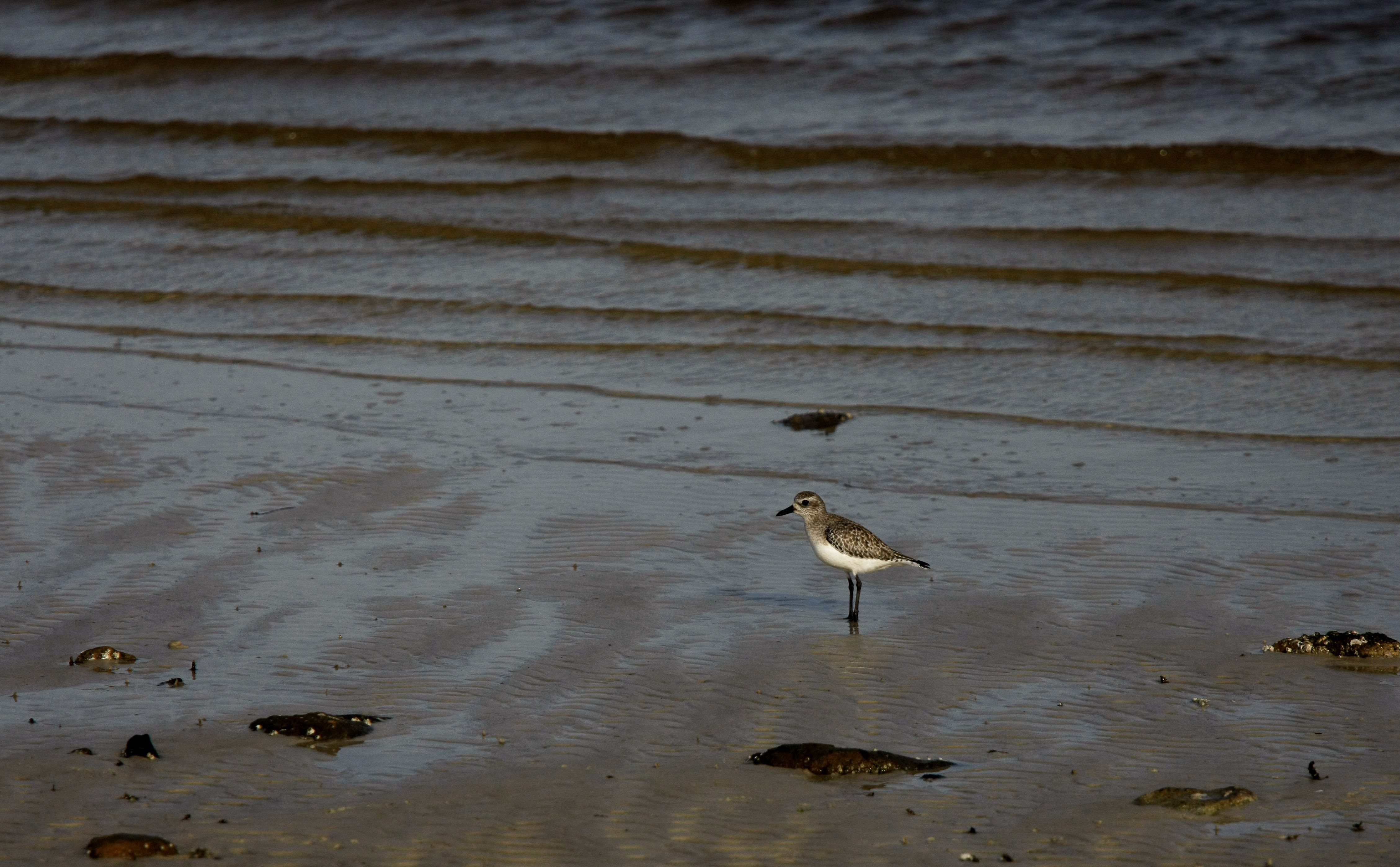 Bird on the beach--by gwen furey