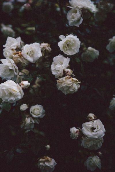 Haze Aesthetic Dark Flowers Flower Aesthetic Flowers