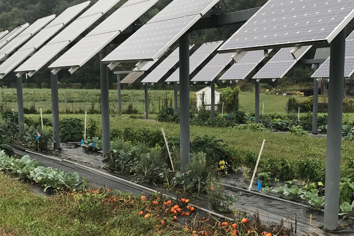 Agrivoltaics Solar Panels On Farms Could Be A Win Win Massachusetts Is Leading The Charge In Dual Use Solar Installatio Solar Installation Solar Panels Solar