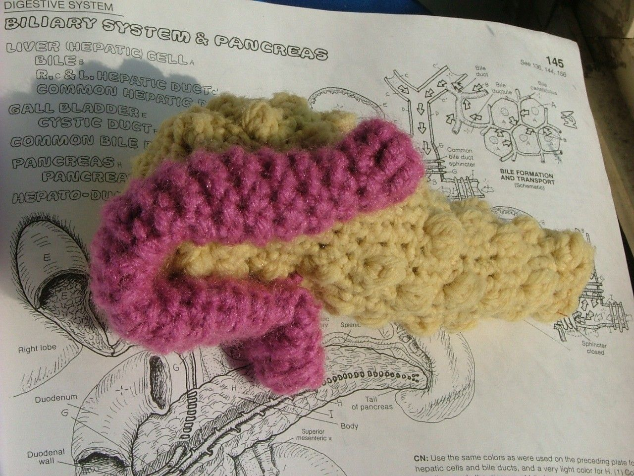 Crochet Plush Pancreas. $18.00, via Etsy.