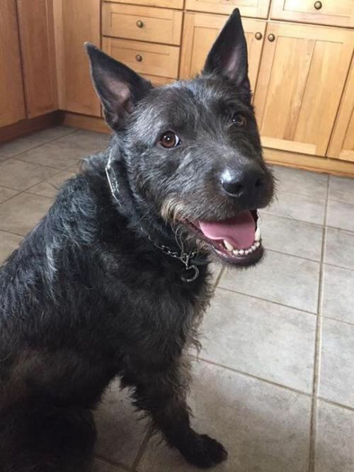 Check Out Neo On Petfinder Https Www Petfinder Com Petdetail