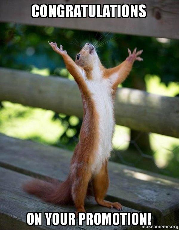 Congratulations On Your Promotion Meme : congratulations, promotion, Congratulations, Promotion!, Happy, Squirrel, Squirrel,, Animals,, Animals