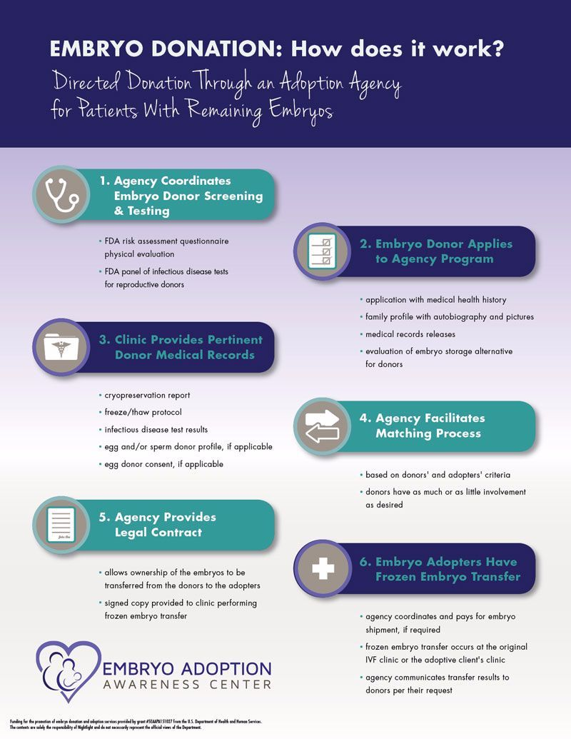 What is the embryo adoption process, step by step? This infographic is so  helpful!