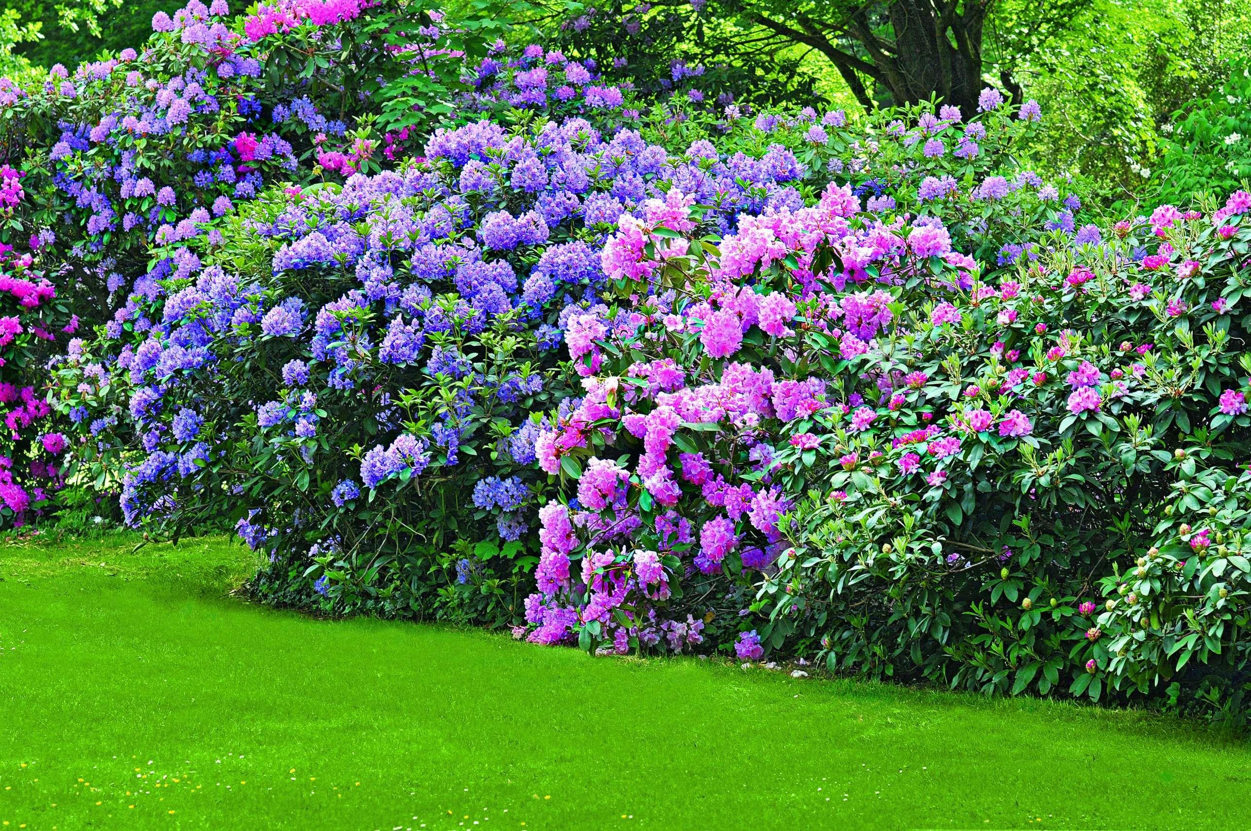 12 Blühende Hecke Winterhart Garten Gestaltung