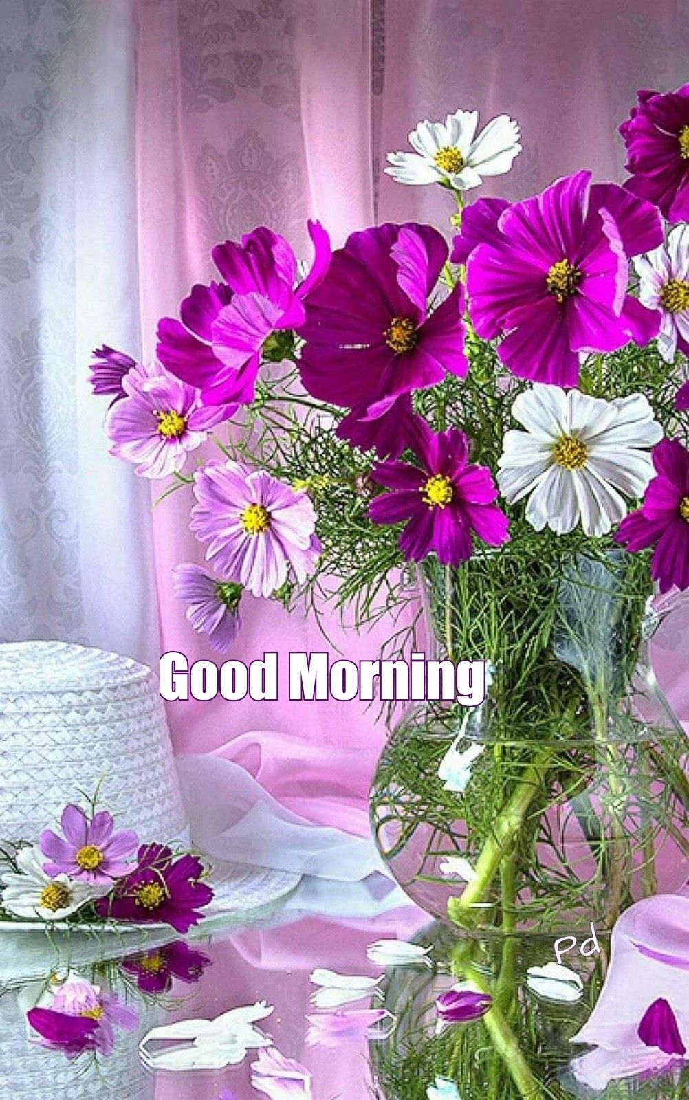 Good Morning Greetings Good Morning Flowers Cosmos Flowers Flower Wallpaper