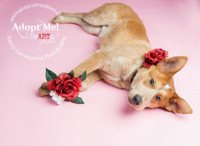 Adopted Adopt Tinker From Animal Rescue R Us In New Jersey And He Will Be Your Valentine Photo By Stacey Gammon Pet Photographer Animal Photography Pets
