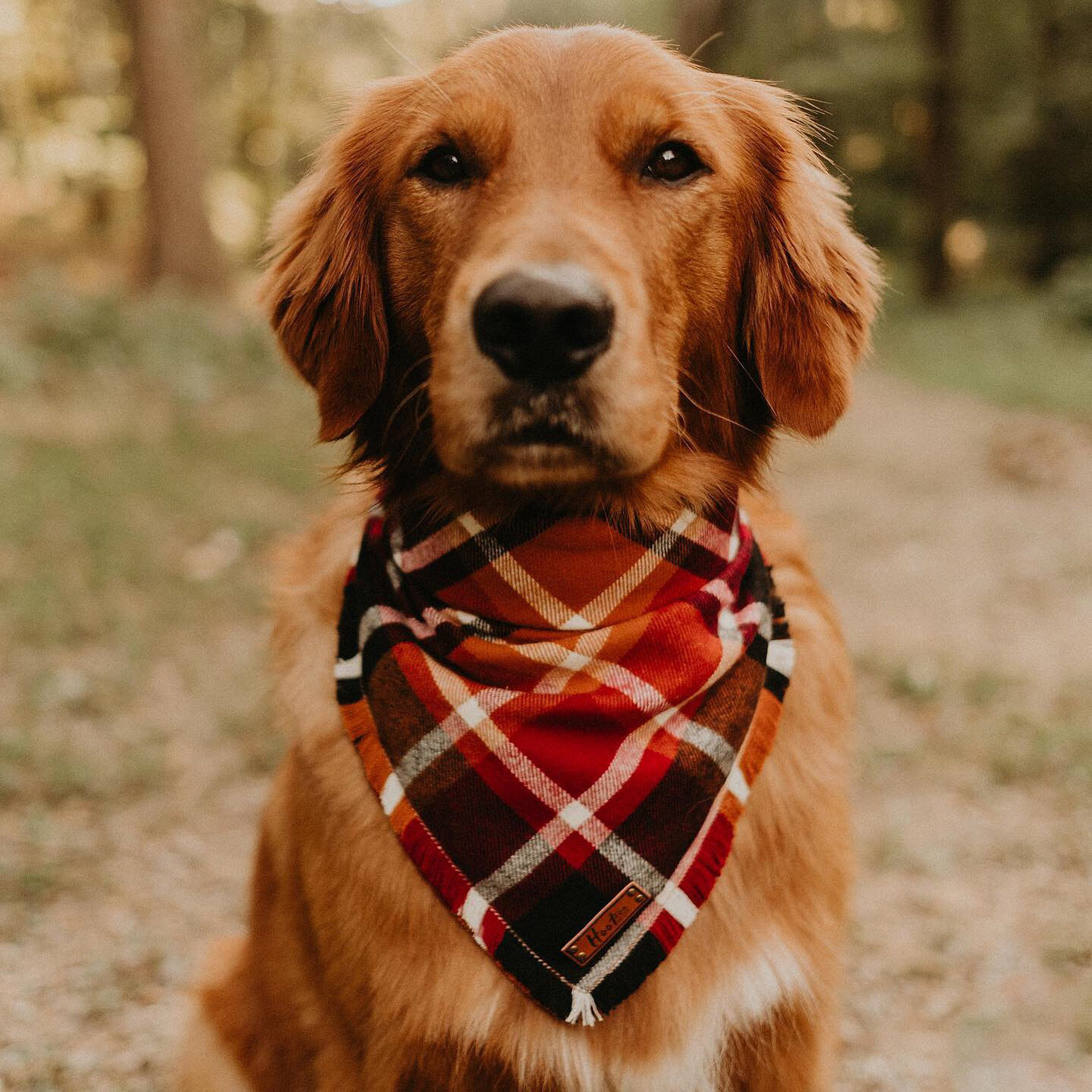 Dark Red Golden Retriever Golden Retriever Dogs That Hike Hiking Dogs Of Instagram Dogs On Adventures Dog In 2020 Cute Dog Toys Outdoor Dog Toys Black Dogs Breeds