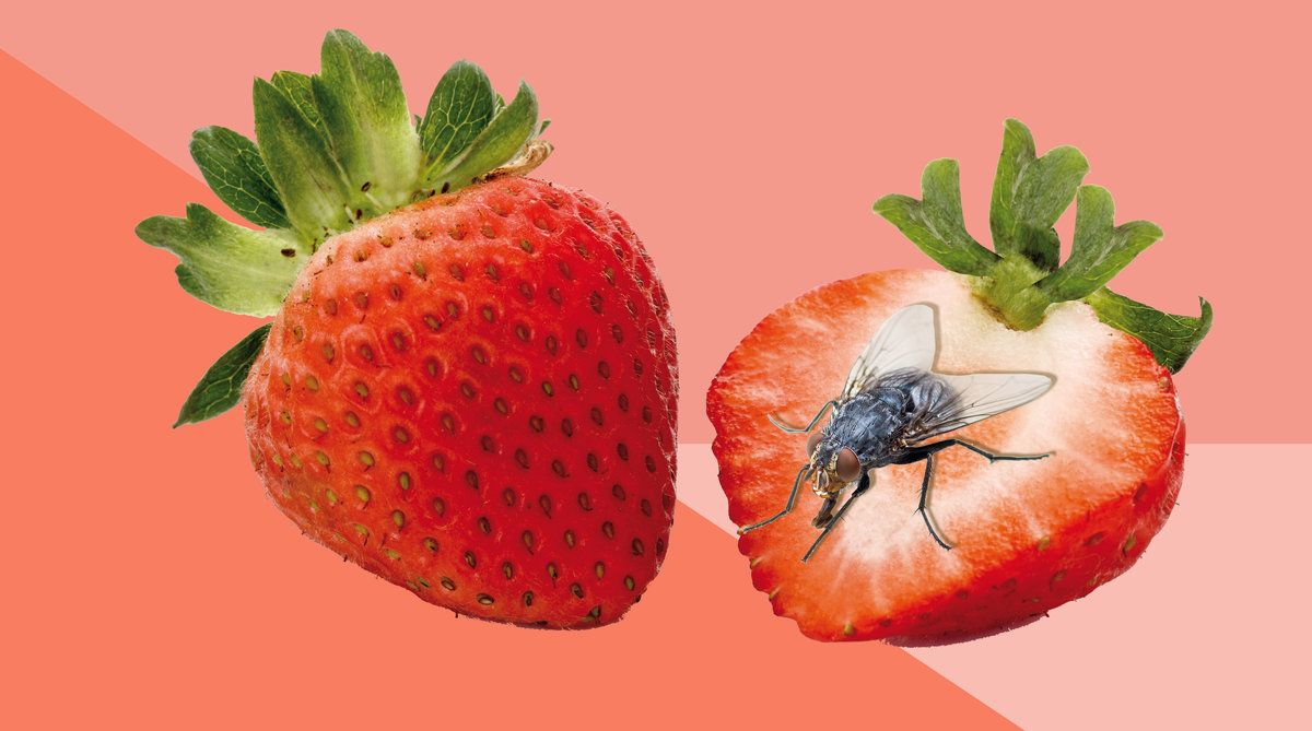 How To Get Rid Of Fruit Flies For Good Fruit Flies Fruit Fruit Fly Trap