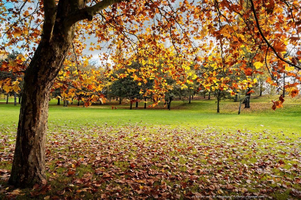 Paysage Automne Gratuit Les Plus Belles Photos Par Bonjour Nature Paysage Automne Paysage Photos Paysage