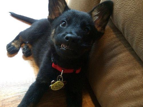 those little teeth!