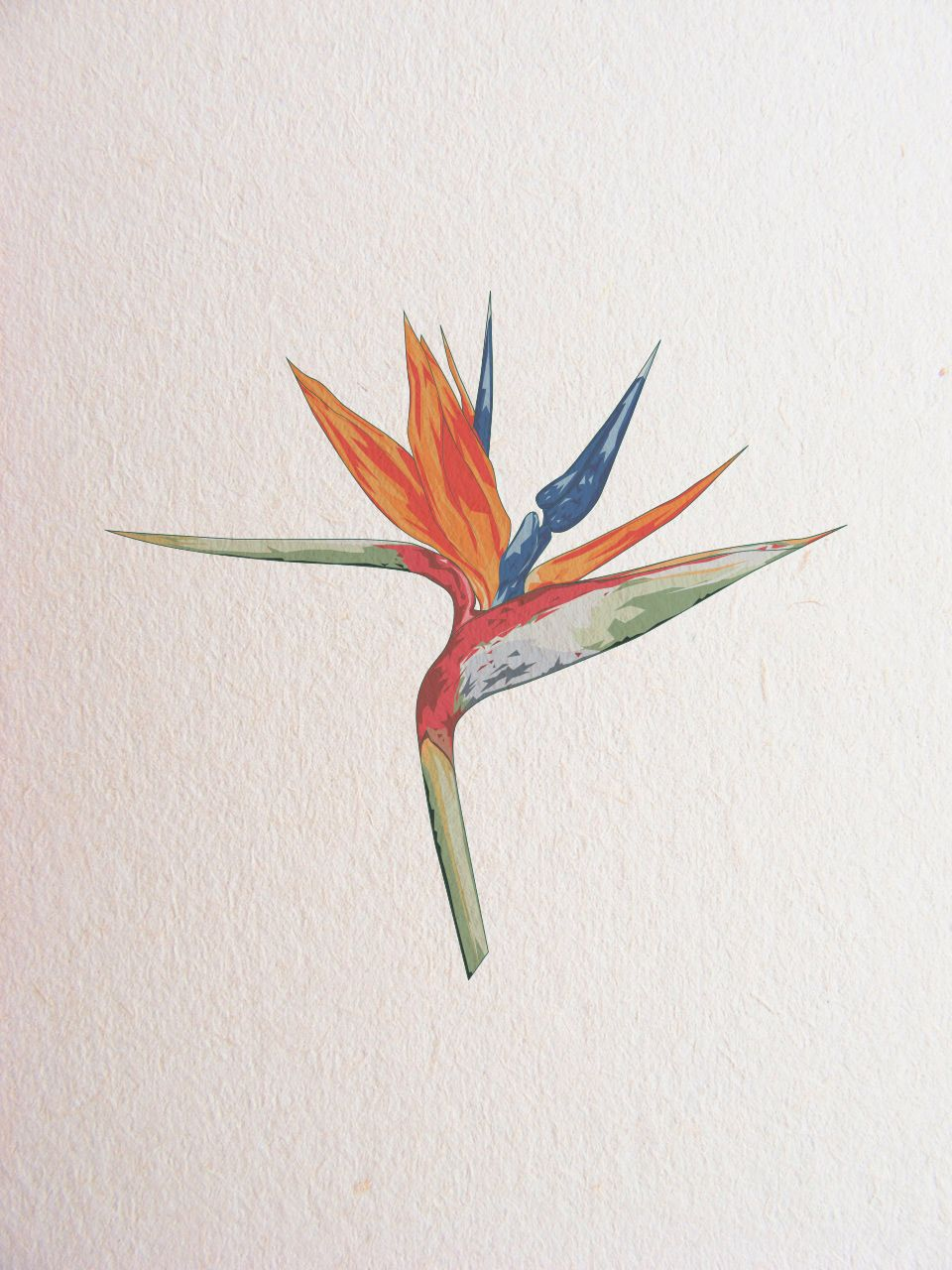 Bird Of Paradise Flower Watercolor Flowers Paintings Bird Watercolor Paintings Flower Tattoos