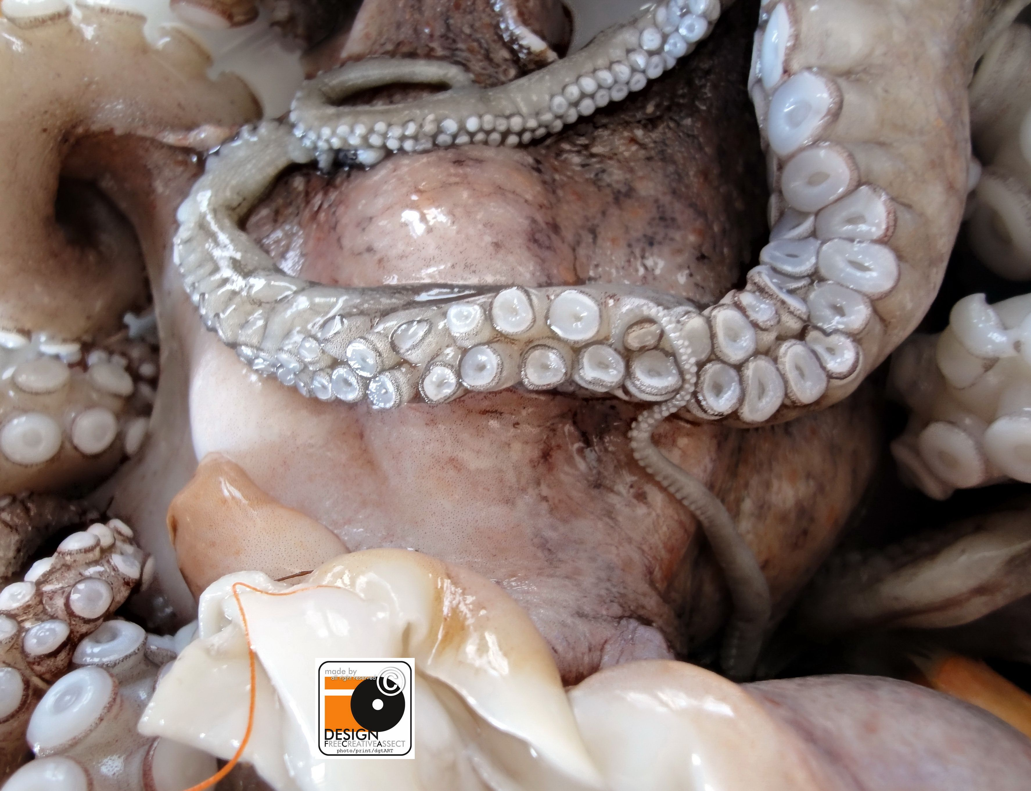 operation octopus