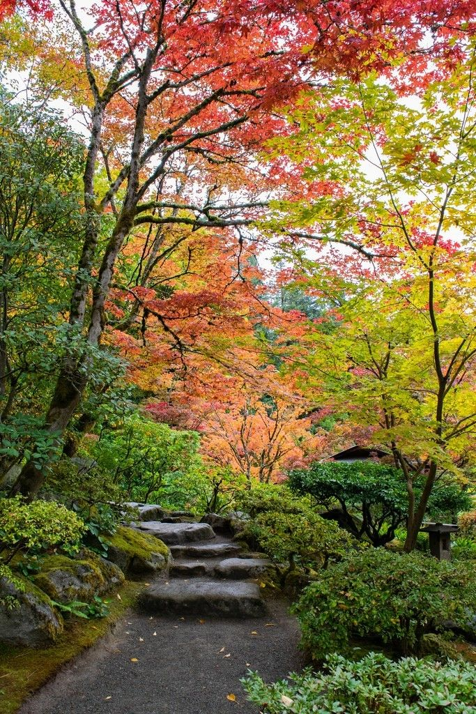 Autumn Path Seattle Japanese Garden Seattle japanese