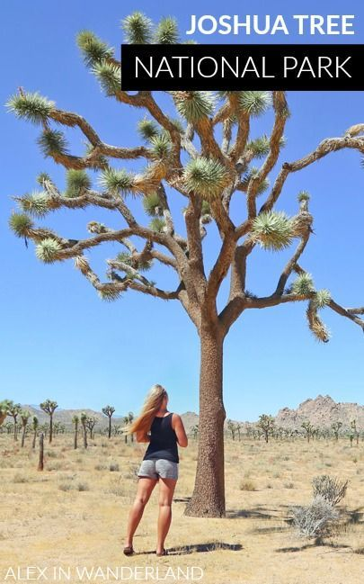 A Top Down Tour of Joshua Tree National Park