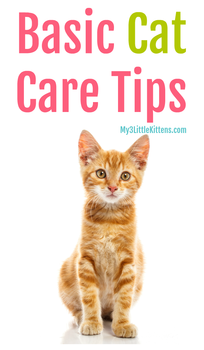 Important Basic Cat Care Tips My 3 Little Kittens Cat Care Tips Cat Care Kitten Care