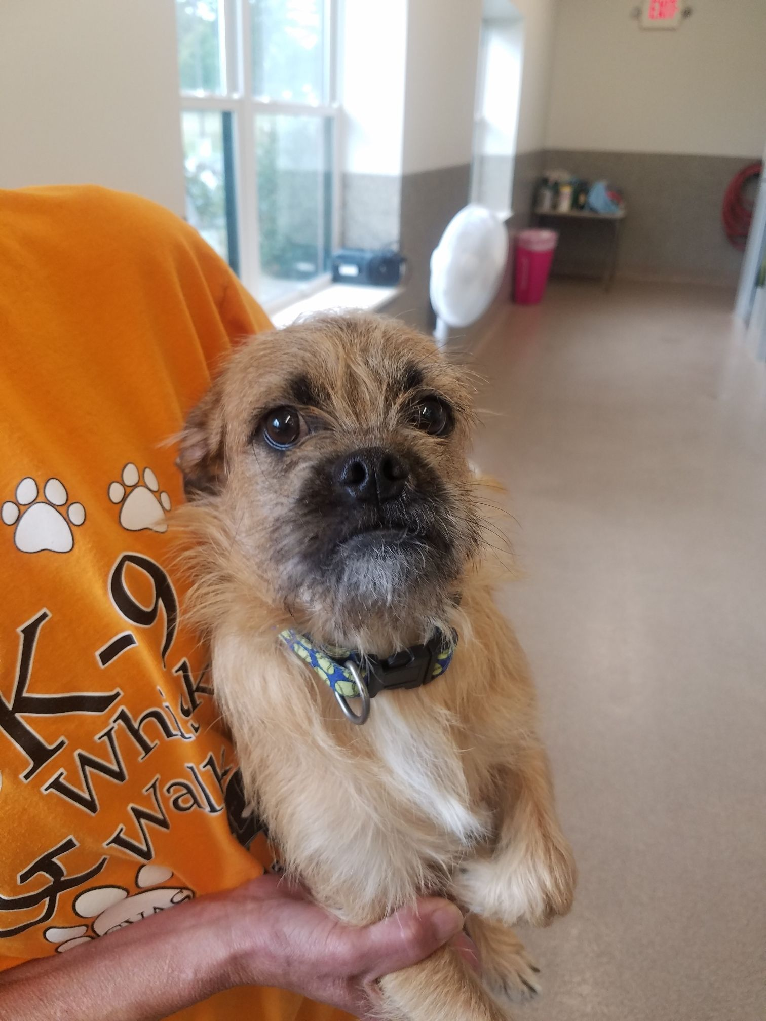 Adopt Snoop Dogg On Snoop Dogg Poodle Mix Poodle Mix Dogs