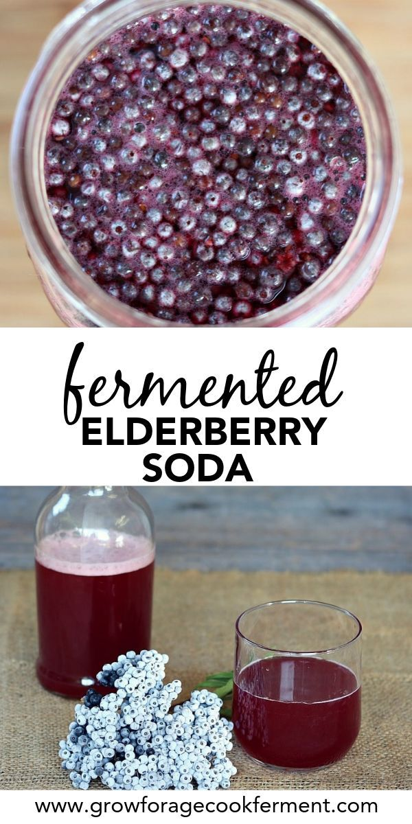 Fermented Elderberry Soda with Ginger and Honey #favoriterecipes