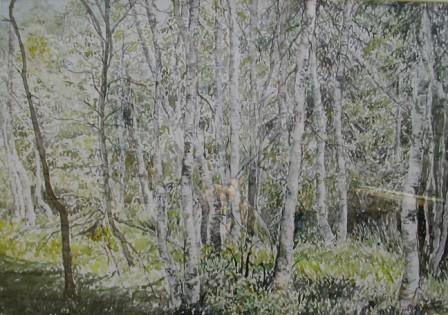 Watercolor. Gerd Elgshøen. Bjørkeskog