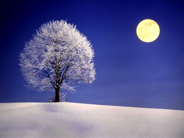 Winter Night With Full Moon Cold Moon Winter Moon Full Moon