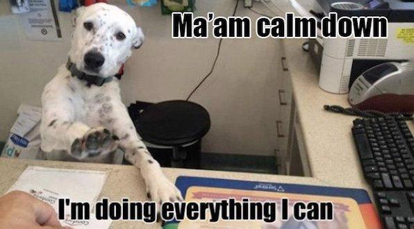 15 Best Internet Dog Memes | Dog memes, Dog pictures, Funny