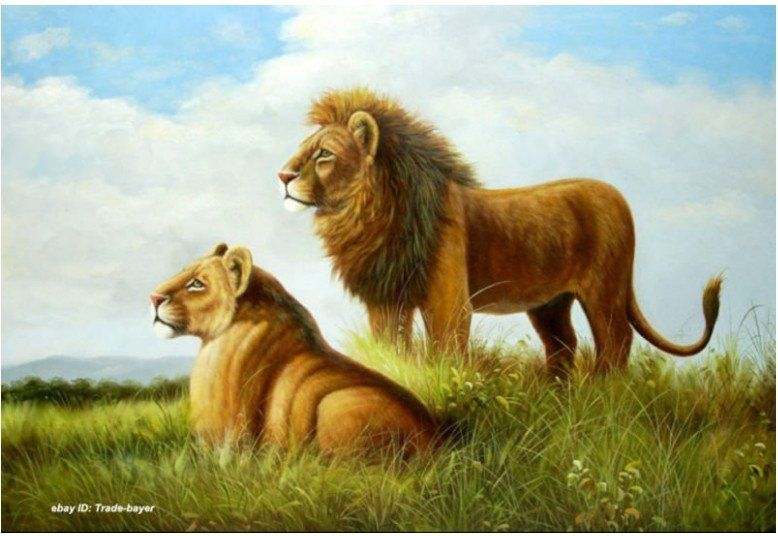 Art oil painting Animals African Lion Couple II free