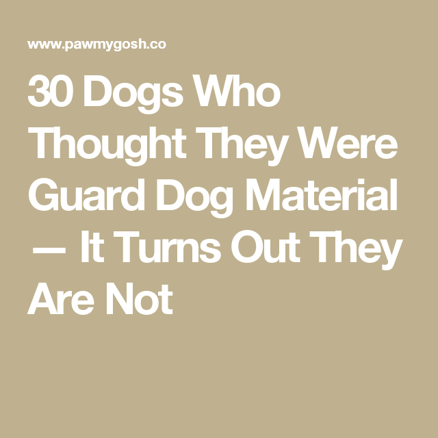 30 Dogs Who Thought They Were Guard Dog Material — It Turns Out They Are Not