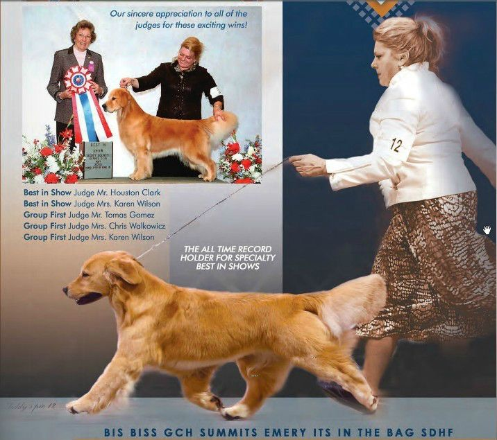 Bis Biss Gch Ch Summits Emery Its In The Bag Sdhf Golden Retriever