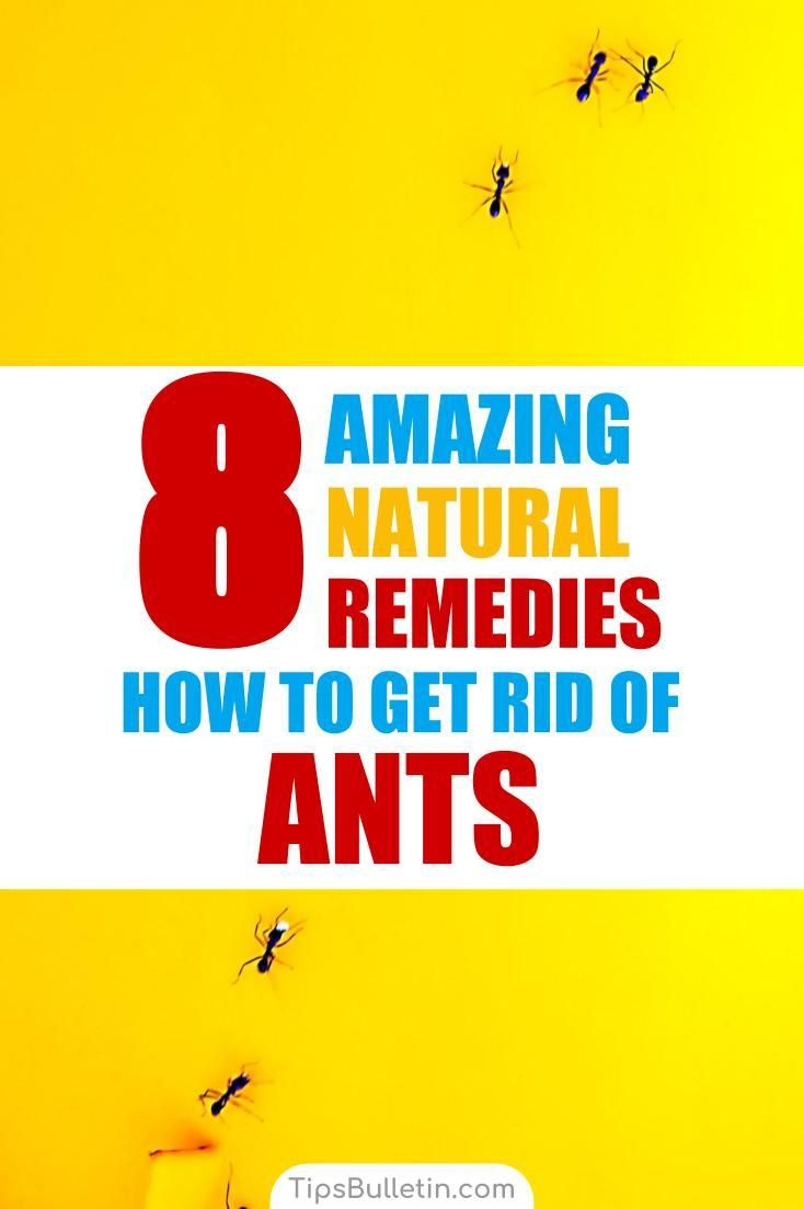 8 natural ways to get rid of ants rid of ants get rid