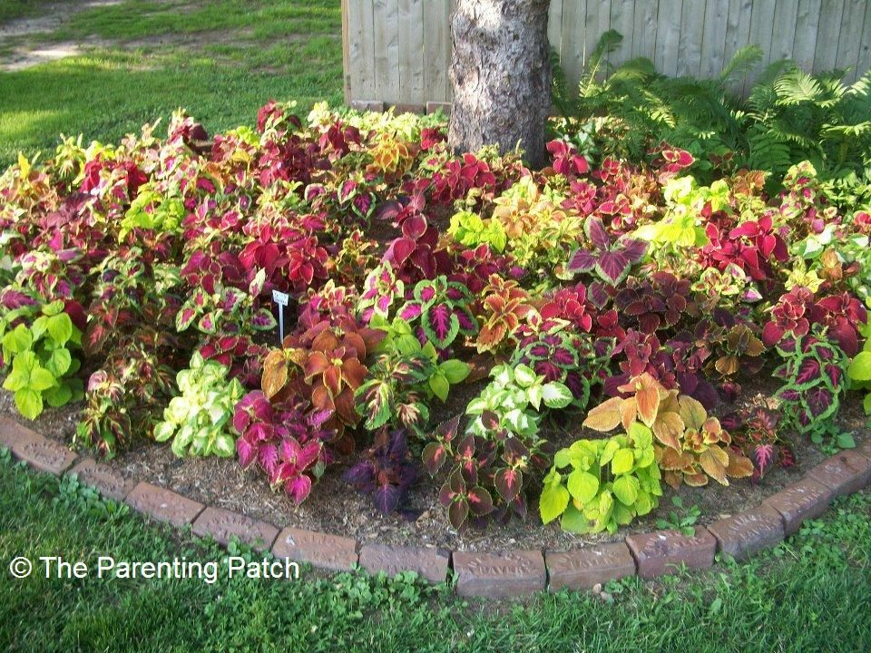 Gardening tips and ideas for planting flowers around trees for Small patio plant ideas