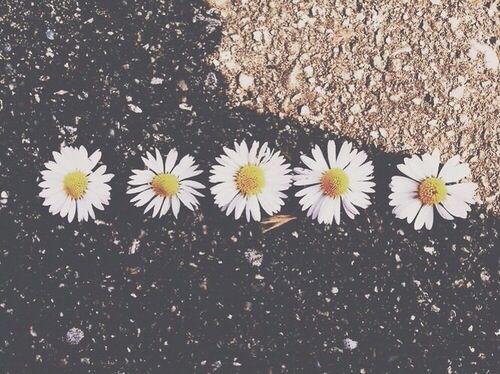 Quem é Você Alasca Beautiful Tumblr Twitter Wallpaper