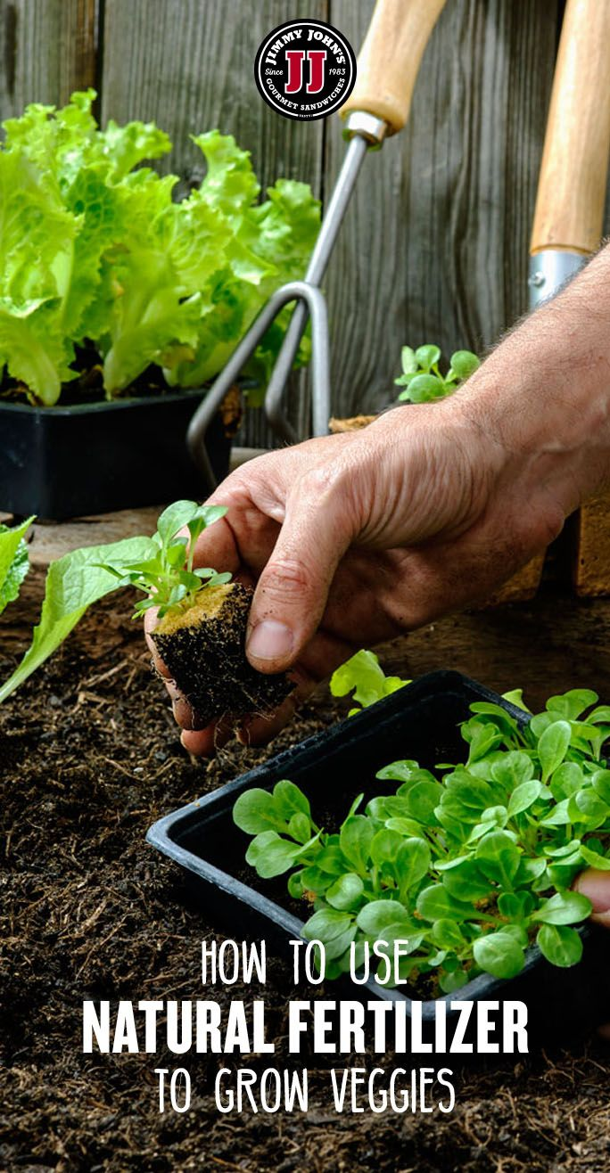How To Fertilize A Vegetable Garden Organic Gardening Tips