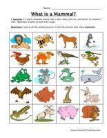 Mammal Classification Worksheet Science Science Worksheets
