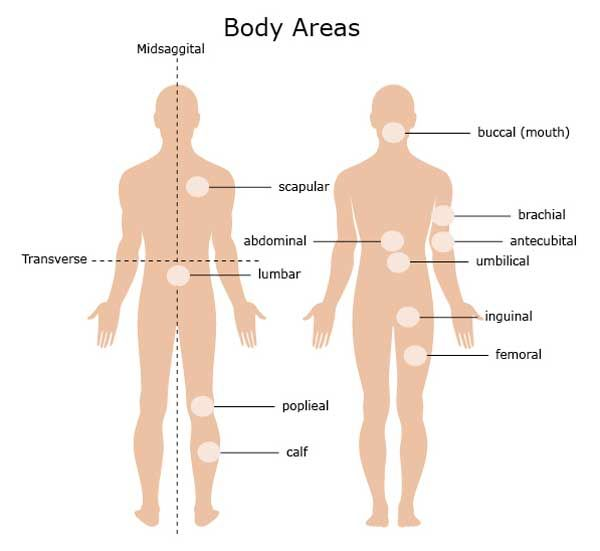 Anatomical Body Areas Anatomy Pinterest Anatomy And Bodily